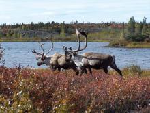 Boreal photo contest winner Wildlife