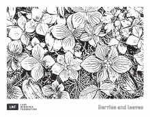 A page from our colouring pages with the outlines of leaves and berries.