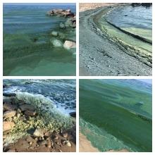 Collage of photos showing algae blooms on Lake Winnipeg