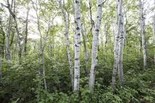 Conserving the Boreal Forest