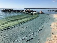 Algae bloom on Lake Winnipeg