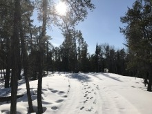 Forest with show on the ground and visible human footprints