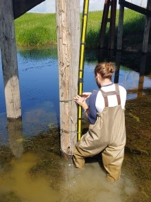 A man wearing hip-waders and knee-deep in water installing a stilling well